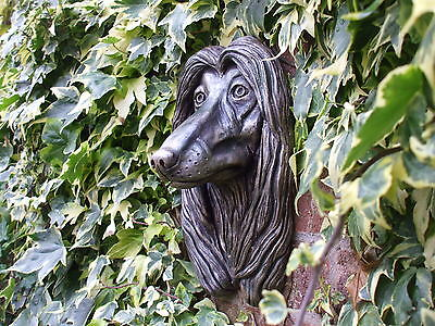 Big Afghan Hound Dogs Bronzed  Stone Head Wall Sculpture