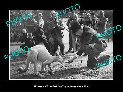 Old Large Historic Photo Of British Pm Winston Churchill Feeding A Kangaroo 1947