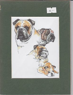 "8"" X 6"" MOUNTED  LITHOGRAPH PRINT of A MASTIFF STUDY"