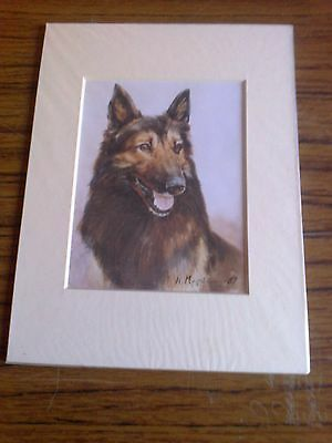 """MOUNTED 8"""" x  6"""" OPEN EDITION OIL PAINTING  PRINT of  a  BELGIAN SHEPHERD DOG"""