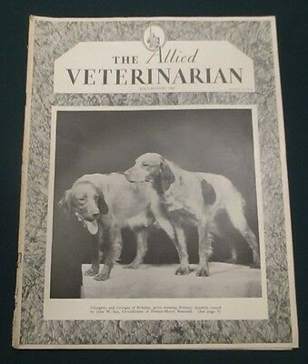 1947 Allied Veterinarian Magazine Prize Winning Brittany Spaniels