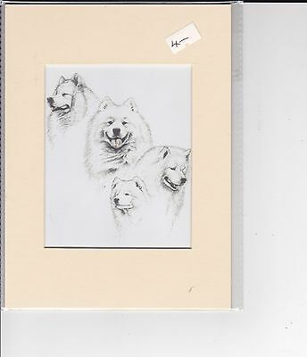 """8"""" X 6"""" MOUNTED  LITHOGRAPH PRINT of A  SAMOYED DOGS STUDY"""