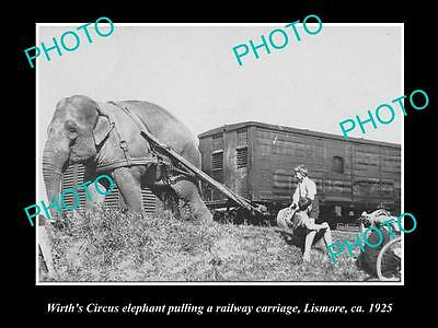 Old Historic Photo Of Wirths Circus Elephant Pulling The Carriage, Lismore 1925