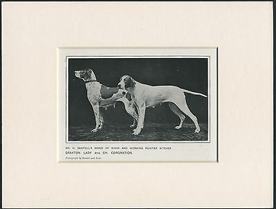 Pointer Dogs Old 1912 Antique Named Dog Print Mounted Ready To Frame