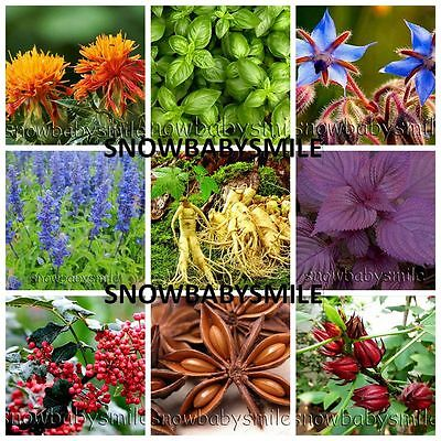 58 Kinds 36,320+ Herb Seeds Aromatic Spices Vegetable Medicinal NON GMO LOT Rare