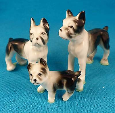 Boston terrier dog family mom dad & puppy FREE shipping excellent
