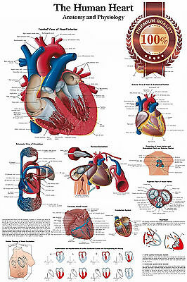 New Human Heart Medical Diagram Chart Informational Anatomy Print Premium Poster