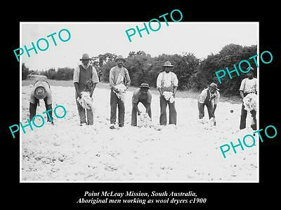 OLD LARGE HISTORIC PHOTO OF POINT McLEAY SA, ABORIGINAL WOOL WASHERS c1900