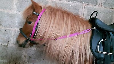 GRASS REIN fully Adjustable, 2 sizes to stop horse/pony eating grass