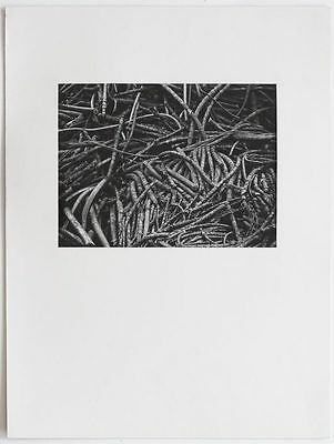 Superb 1990s abstract tree roots analogue ART PHOTO, signed, matted