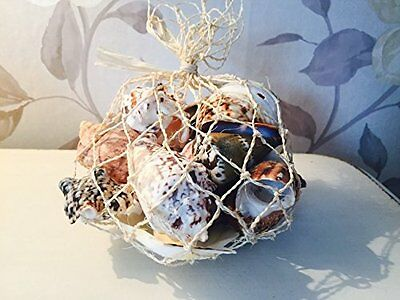 Netted Bag with Real Sea Shells ~ Nautical Home Decor Crafts Shell FIsh Aquarium