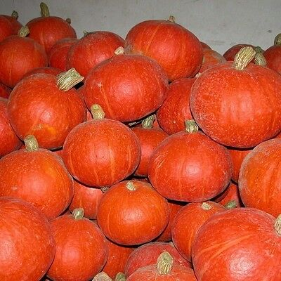 Pumpkin Seed ,Happy Farm-winter squash ,Color packaging seeds-about 8particles