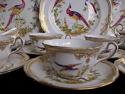 SPODE CHELSEA BIRD  #Y8555- RAISED DOTS (c.2002+) CUPS & SAUCER (s)- RARE! MINT!