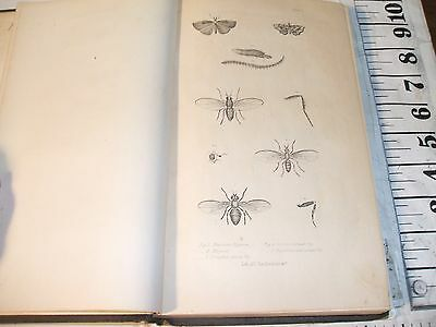 Entomology 1856 Noxious Beneficial Insects New York State Asa Fitch