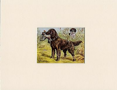Irish Setter And Duck 1950'S Dog Art Print Mounted Ready To Frame