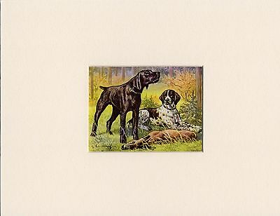 German Shorthaired Pointer 1950's Dog Art Print Mounted Ready To Frame