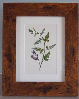 DEADLY NIGHTSHADE - Antique Botanical Floral Flower Print 1880s by Hulme - FRAME