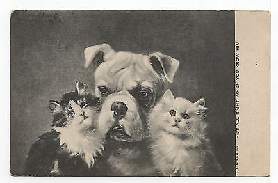 Bulldog And Two Cats Charming Old Dog Picture Postcard  From 1904