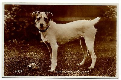 Jack Russell Fox Terrier Valentines Issue Old Sepia Photo Dog Postcard