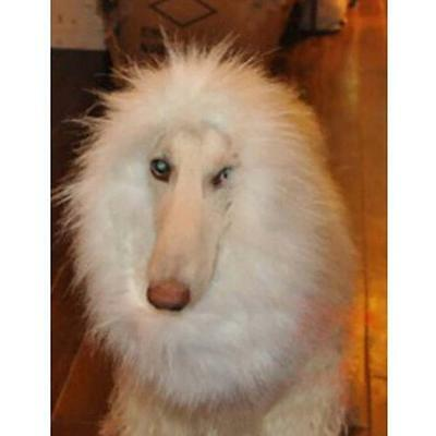 Pet Costume Lion Mane Wig Dog Halloween Fête Sanda Fancy Dress up Blanc M Hot DC