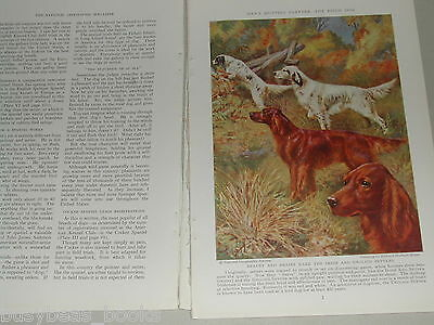1937 magazine article Field Dogs, canine info, color art