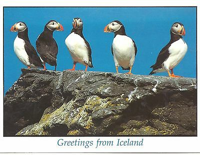 Iceland Postcard - Greetings from Iceland