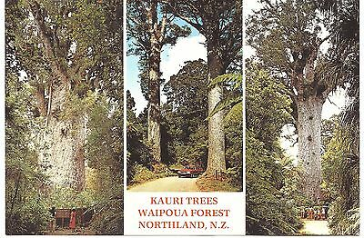 New Zealand Postcard Kauri Trees Waipoua Forest