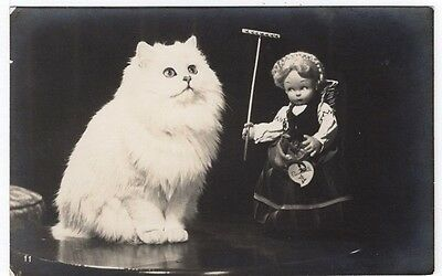 White Cat And Toy Doll Old Real Photo Postcard