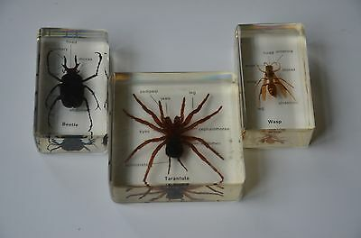 Lot Of 3 Insects In Lucite, Tarantula, Wasp, Beetle, Educational, Home-School