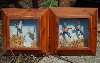Pair of Duck Shadowboxes, hand painted/carved late 1940's from Chi V.L & A store