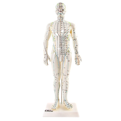 Human Male Acupuncture Model - 50cm - Medical Training Teaching Aid