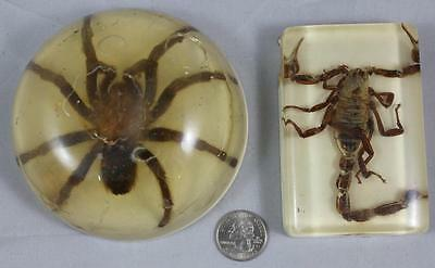 Preserved Tarantula & Scorpion Taxidermy Paperweights Vintage Resin Large