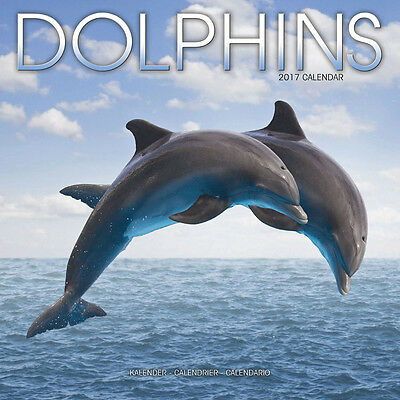 """Dolphins 2017 Wall Calendar by Avonside (12"""" x 24"""" when opened)"""