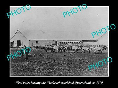 OLD LARGE HISTORIC PHOTO OF THE WESTBROOK WOOL SHED IN QLD c1870