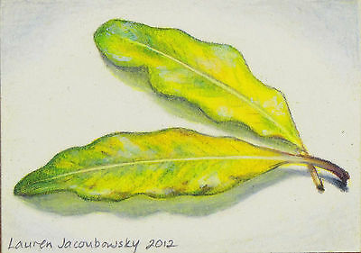 """ACEO Original Colored Pencil Drawing by L.Jacoubowsky - """"Summer Leaves II"""""""