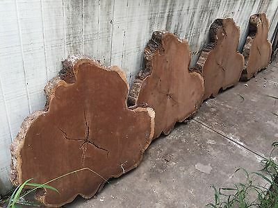 "Mesquite crosscut slabs 4 Pc. Lot  41"" x 32"" x 2.75"""