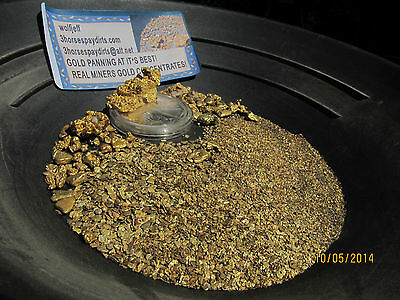 GOLD NUGGETs & Pickers  GOLD Heavy Blacksand Gold Concentrates<  1 1/2 pounds,