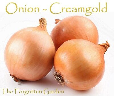 Onion Creamgold Seed 50 Seeds Heirloom Vegetable Garden Bulb