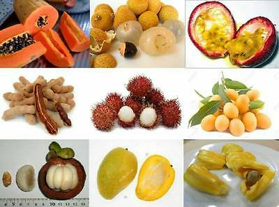mix 50 tropical cashew nut,jackfruit,durian,longan asian tree/plant/fruit seeds