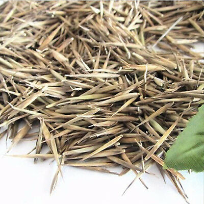 100Pcs Tinwa Green Phyllostachys Pubescens Seeds Garden Supply Plants Bamboo