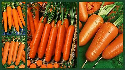 Carrot Seeds, Crazy For Carrots 4 Pk Special, Heirloom Carrot Seeds, Non-Gmo