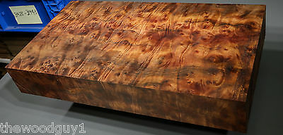 x1411  -     Large  CAMPHOR BURL   - Turning/Craftwood - Air Dried
