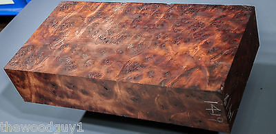 x1419  -     Large  CAMPHOR BURL   - Turning/Craftwood - Air Dried