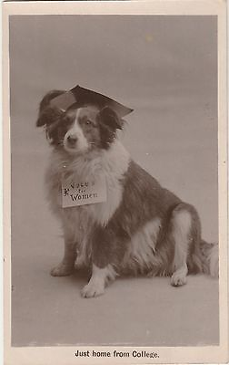 Real Photo Postcard Suffragette Collie Dog 'Just Home From College' 1912