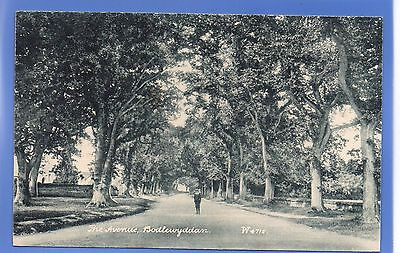 SUPER 1912c THE AVENUE Bodelwyddan WALES WYNDHAM VINTAGE POSTCARD