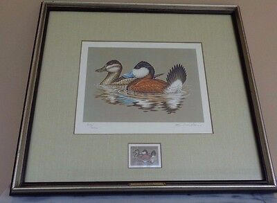 Framed Federal Duck Stamp Print Ruddy Ducks 1981 John S Wilson