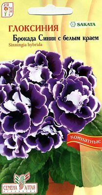 "Gloxinia ""Brocada F1 blue with white edge""""  Japanese High Quality"