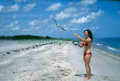 Slide Photo View of Woman in Swimsuit Red Bikini Feeding Seagulls 1970s Model