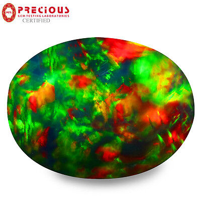 1.66 ct PGTL Certified  Oval Cabochon (12 x 9 mm) Flashing Multicolor Black Opal