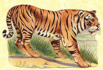 Early 20Th C Scrap,tiger ,approx 18 X 10 Cm